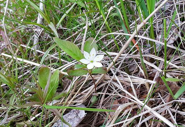 Bjrns Blog Flowers Of Kullfallet